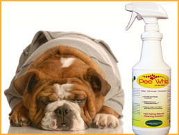 Pee Whiz Pet Urine Stain Removal Cleaner